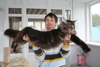 кот рекордсмен - клиент Интернет-магазина зоопродуктов 2